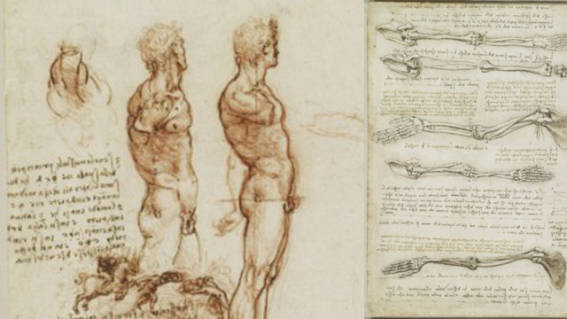 Kostenlose Anatomie-Referenzen - DIGITAL PRODUCTION