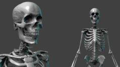 CG-Skelett