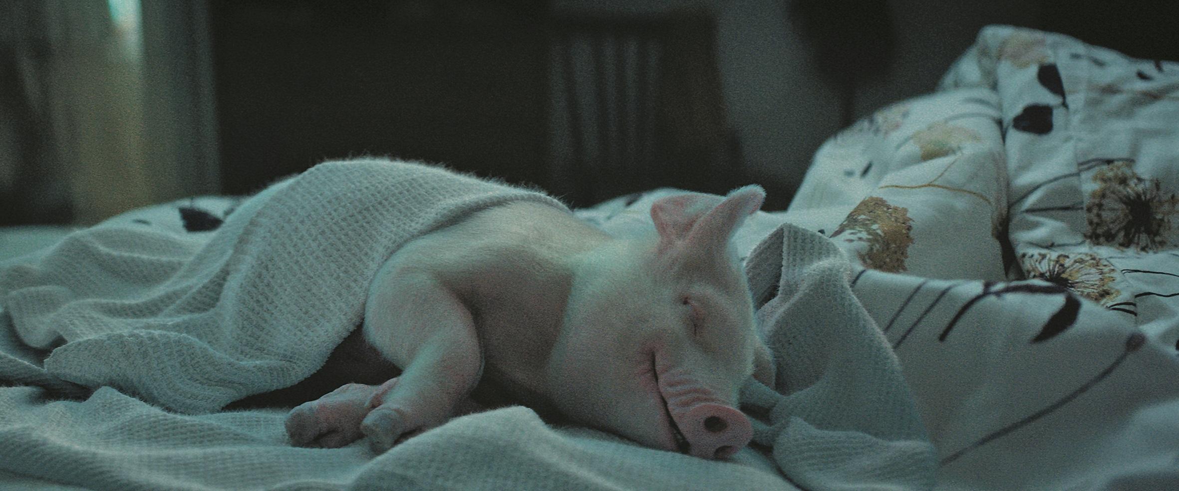 Alle Plates wurden real gefilmt. Nur vereinzelte Elemente, die mit dem Schwein interagieren, wie zum Beispiel diese Decke, kreierte Mackevision Full-CG.