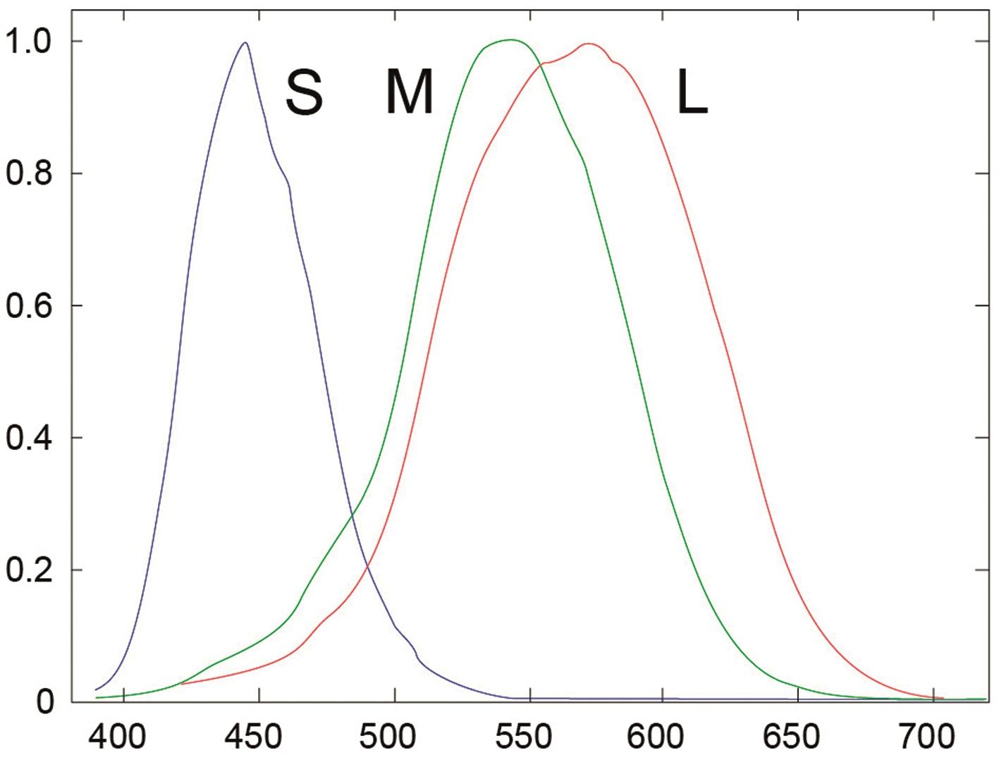 Die Spektralkurven der Farbzellen im menschlichen Auge sind technisch kaum umsetzbar.