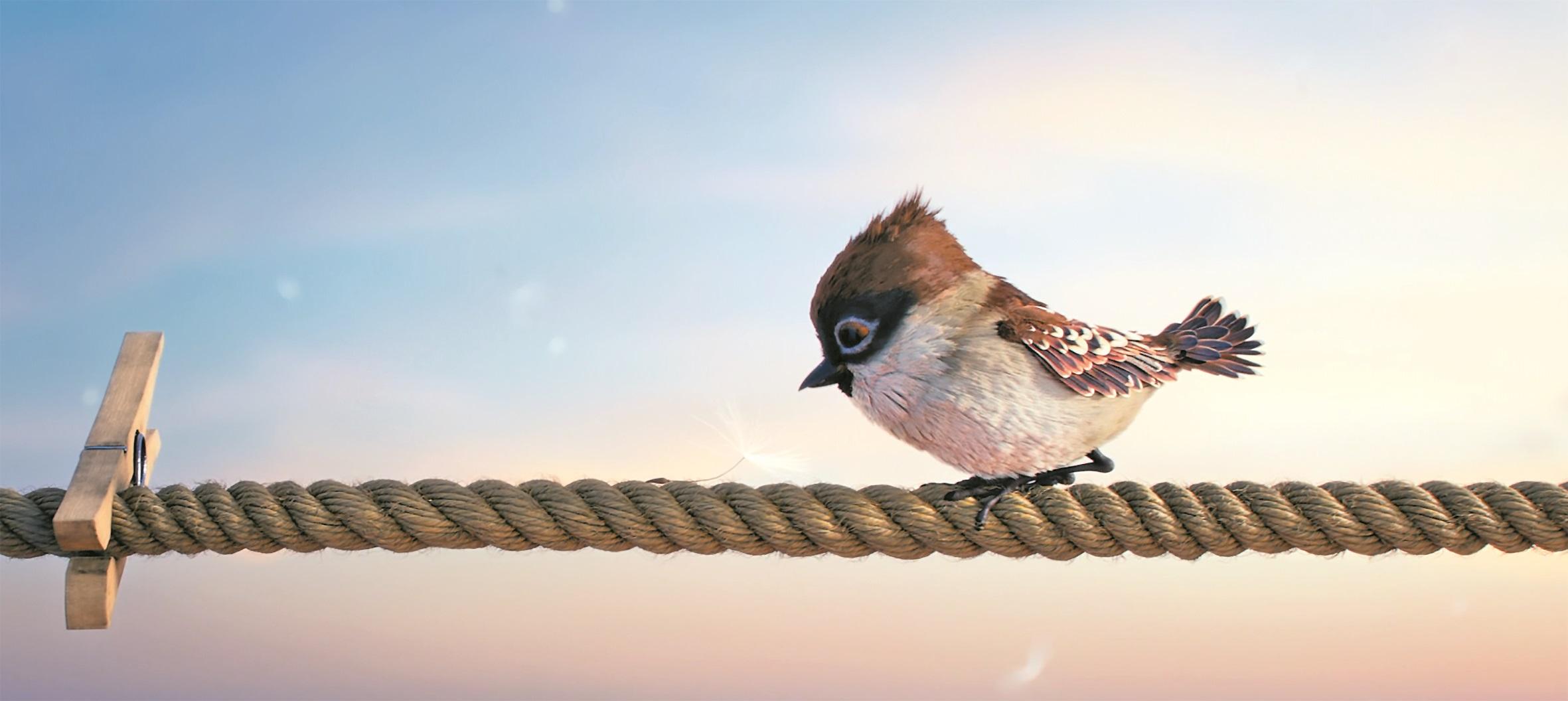 """Winner Best Short Film: """"Tweet-Tweet"""""""
